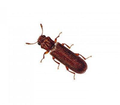 Podwerpost Beetle